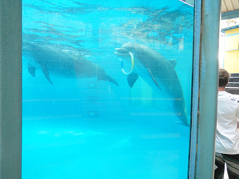 シーライフ・パーク イルカ