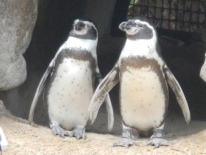シーライフ・パーク ペンギン