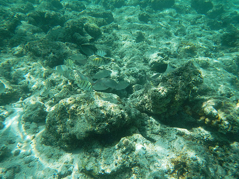 マニャガハ島 海中